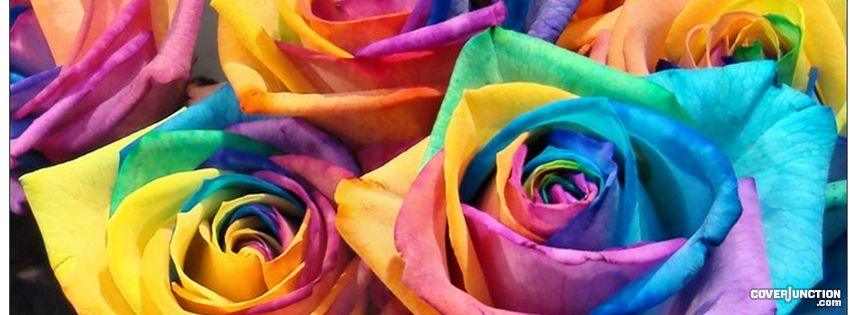 Painted Roses ! Facebook Cover - CoverJunction