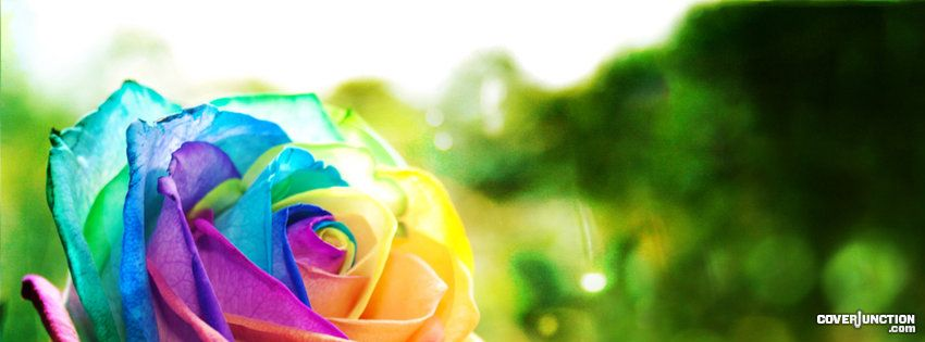 Rose of many colours Facebook Cover