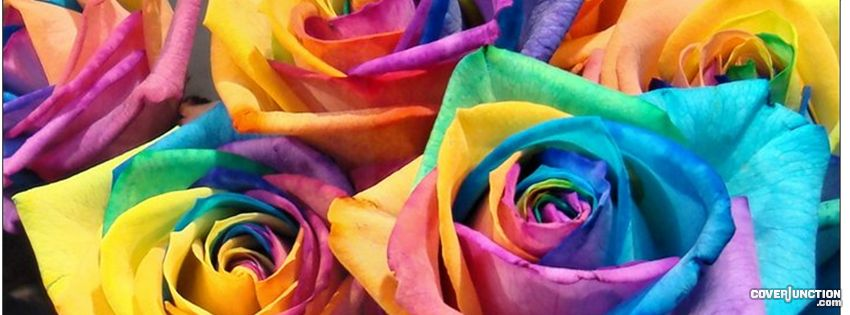 Roses of all colours Facebook Cover - CoverJunction