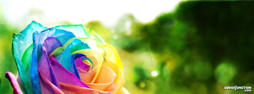Muli-coloured Rose Facebook Cover