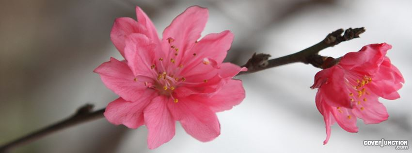 Blossom Facebook Cover
