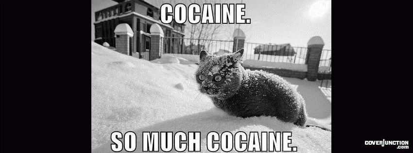 cocaine cat Facebook Cover