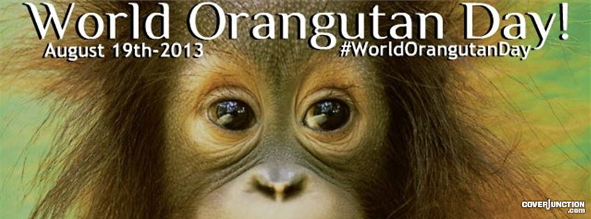World Orangutan Day 2013 facebook cover