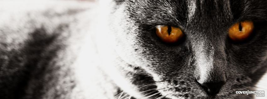 Grey Cat Facebook Cover