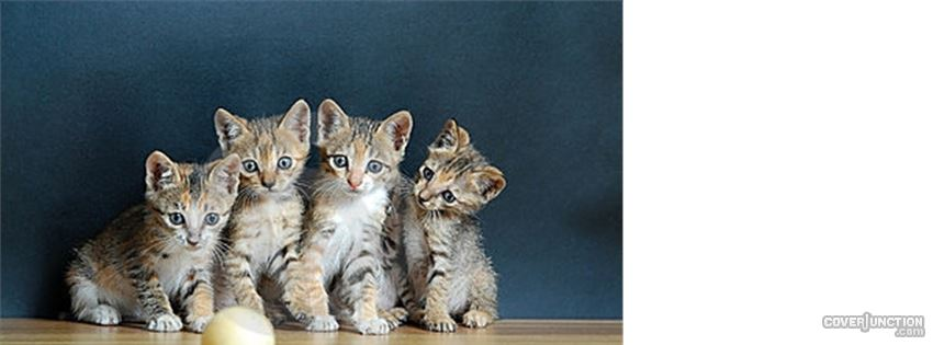 kittys Facebook Cover