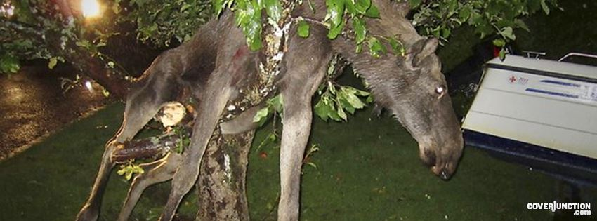 Drunken Moose Facebook Cover