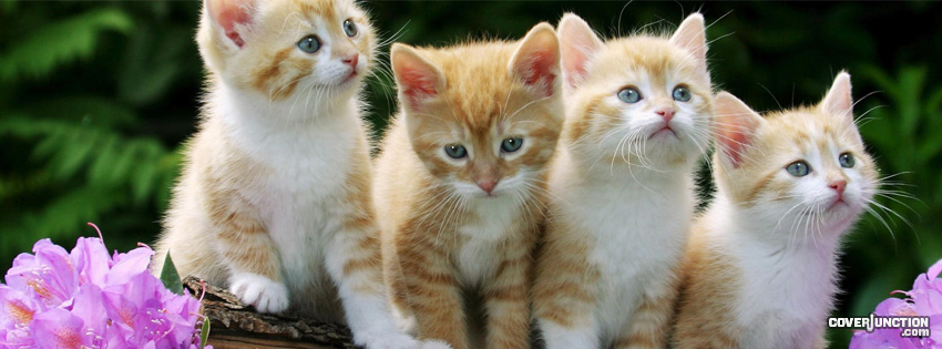Kittens Facebook Cover - CoverJunction