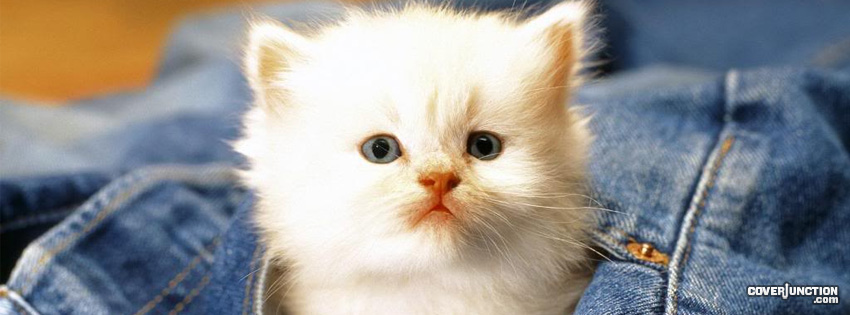 Jeans Kitten facebook cover