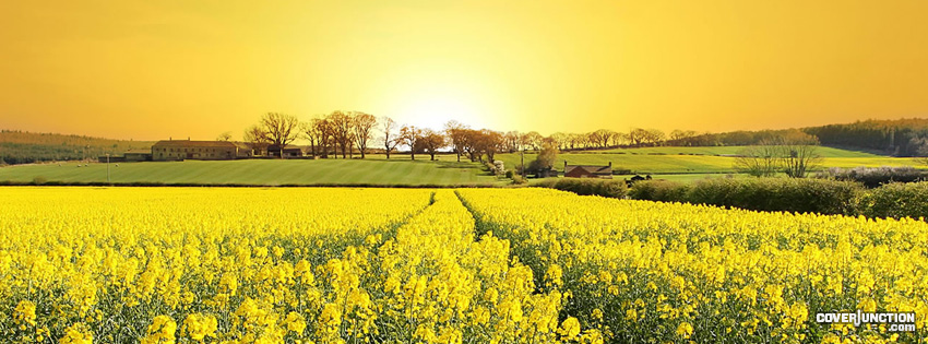 Sunset Field Facebook Cover - CoverJunction