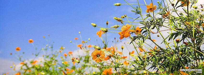 pretty spring flowers facebook cover