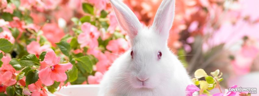 easter bunny with flowers facebook cover